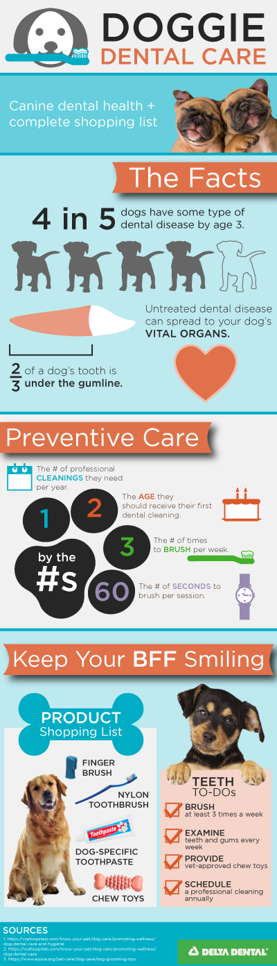 canine dental health